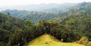 gishwati forest