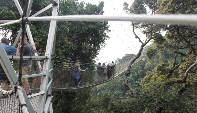 canopy walk in nyungwe