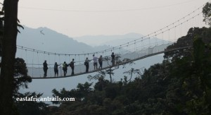 A Canopy Walk tour in Nyungwe Forest National Park Rwanda