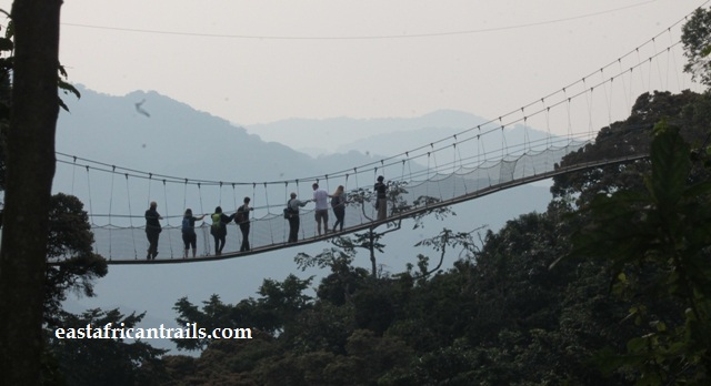 canopy walk in Nyungwe National Park