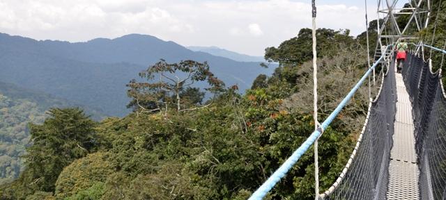 rwanda canopy walk in nyungwe forest