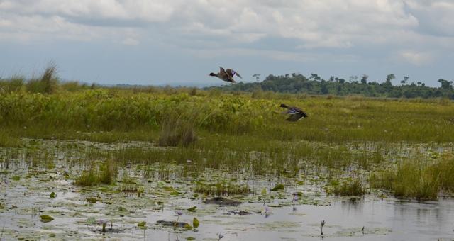 mabamba wetland