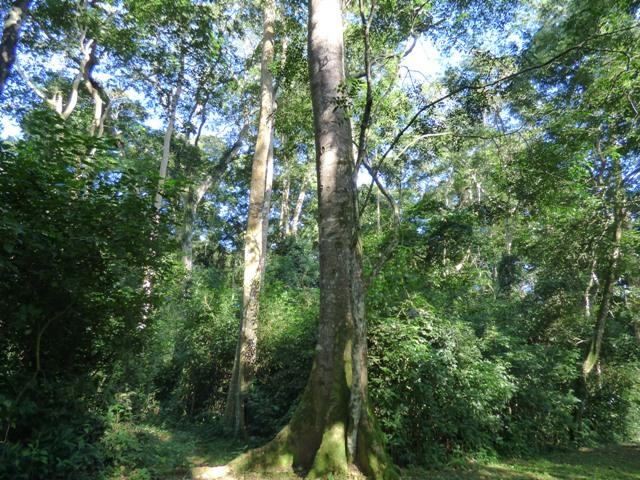 mpanga-forest-reserve