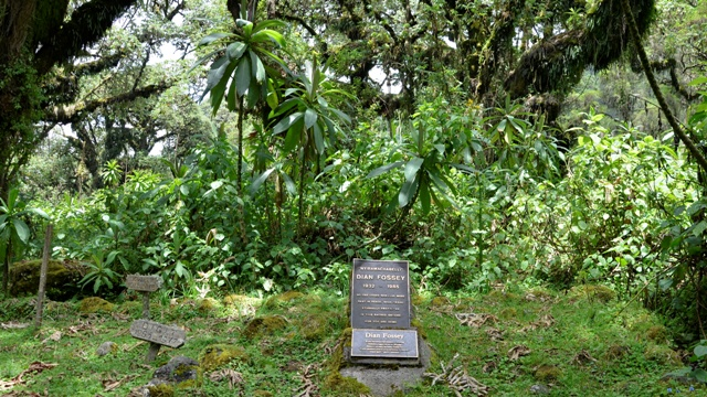 dian-fossey-tomb