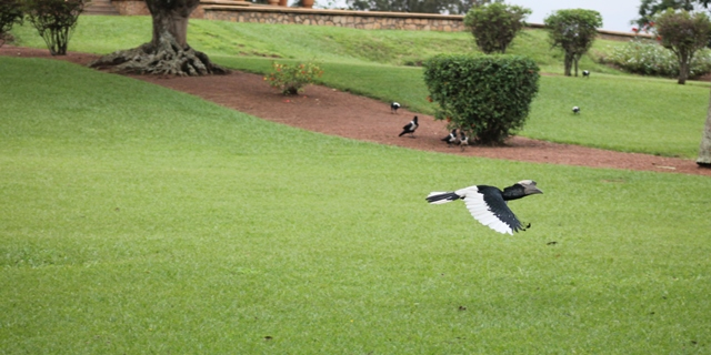 birds at the bahai in kampala