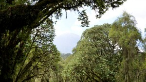 trekking the trail to dian fossey tomb and karisoke research center