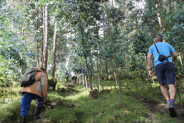 trekking in volcanoes national park