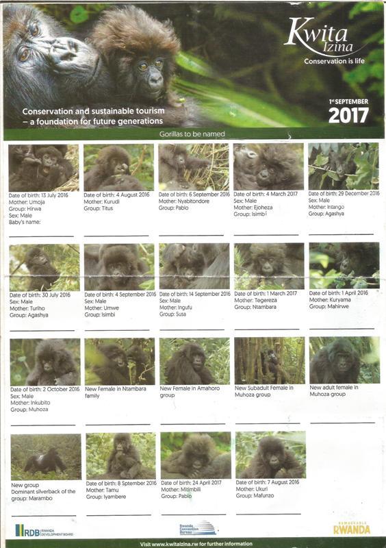 baby gorillas name on Kwita Izina