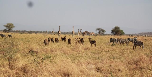 wildlife kidepo valley national park
