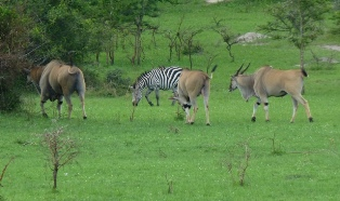 lake-mburo-national-park-thumbnail