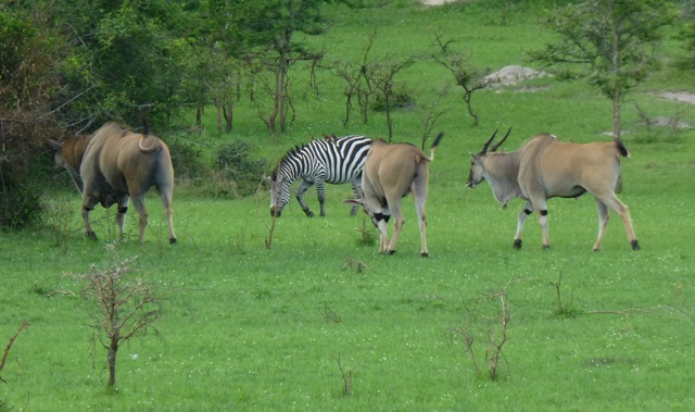 lake-mburo-national-park