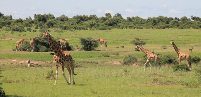 animals in murchison falls national park