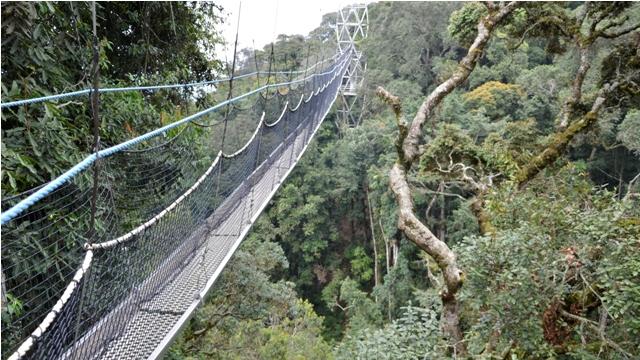 canopy walk nyungwe forest rwanda