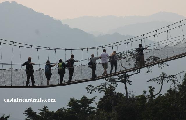 canopy walk tour in Nyungwe forest, Rwanda