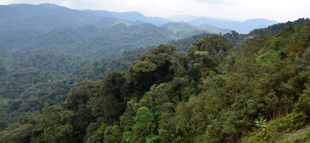 nyungwe-forest-rwanda