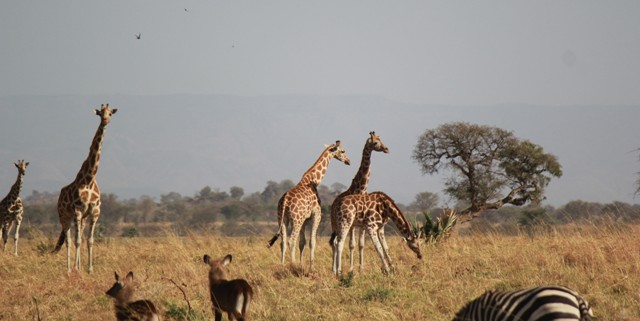 kidepo-national-park