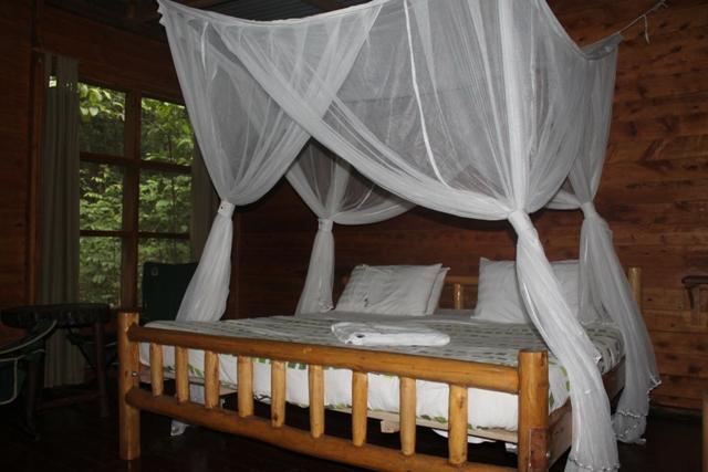budongo eco lodge room