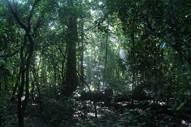 budongo-forest-reserve