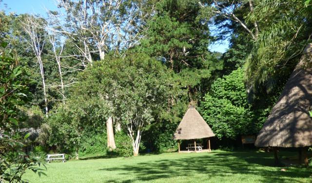 mpanga-forest