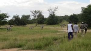 walking-safari-lake-mburo