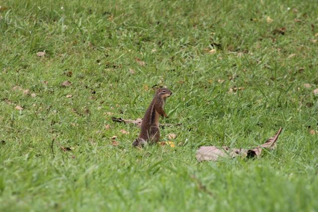 a squirrel at the baha'i kampala